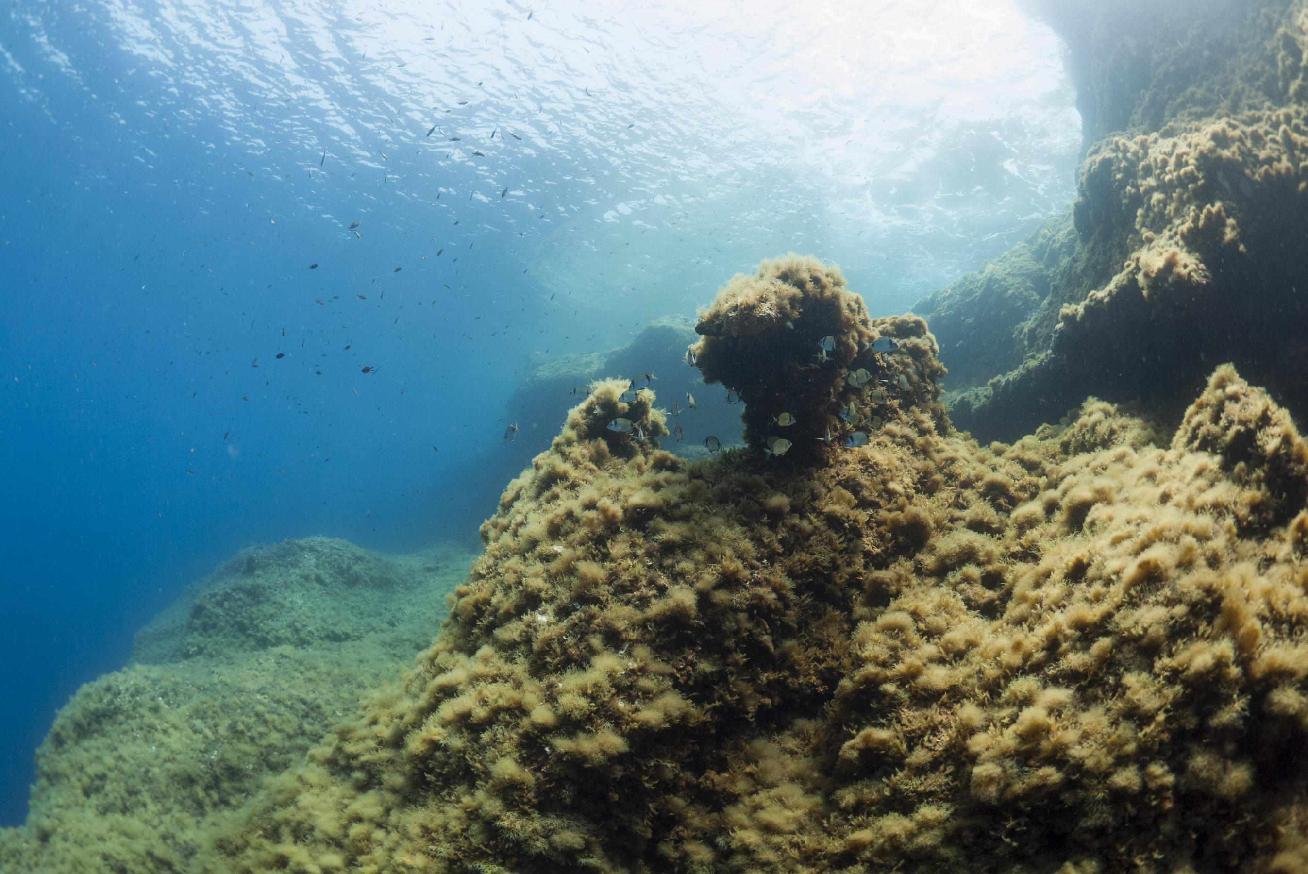 Cirkewwa reef