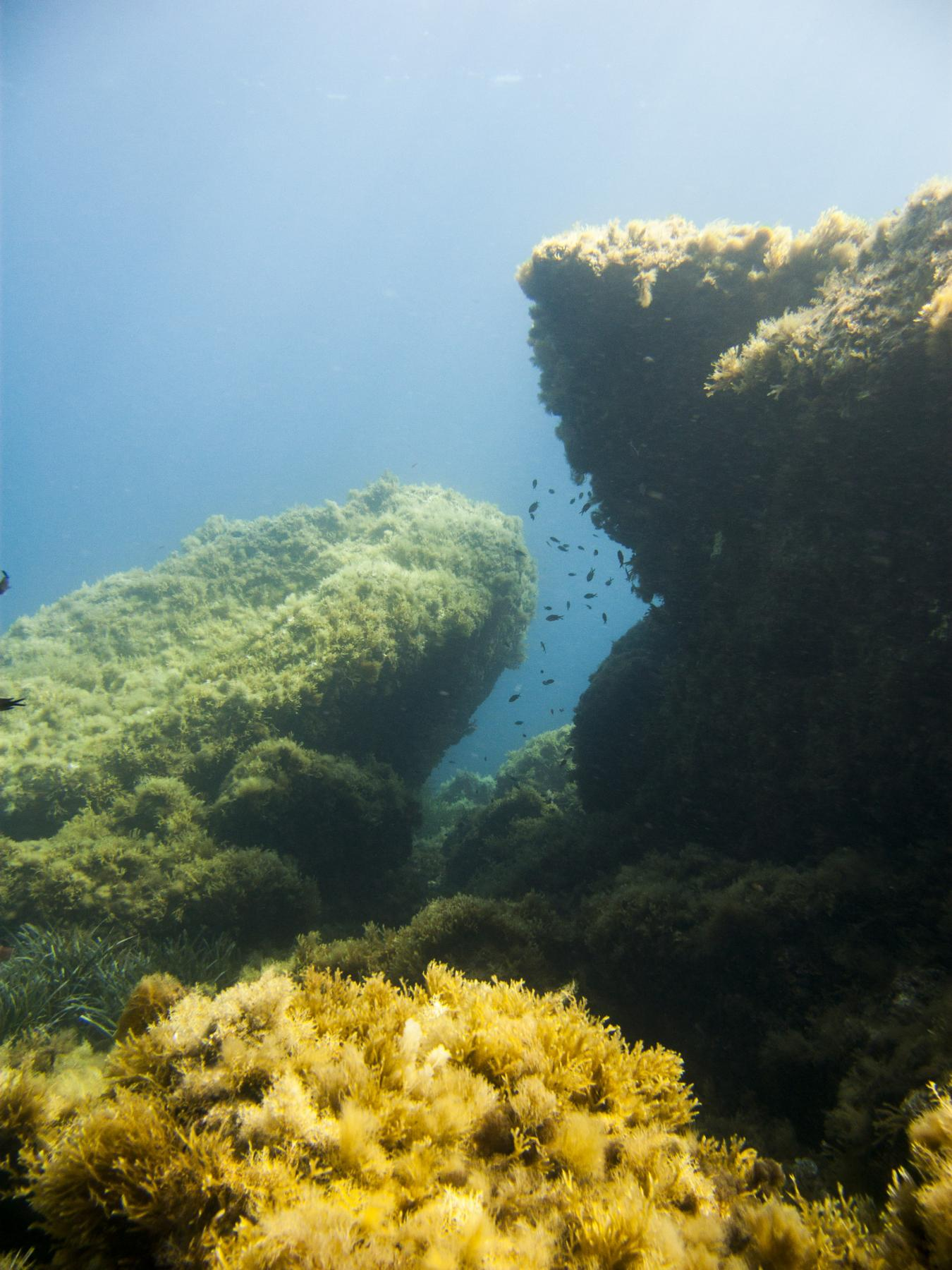 Ghar Lapsi reef