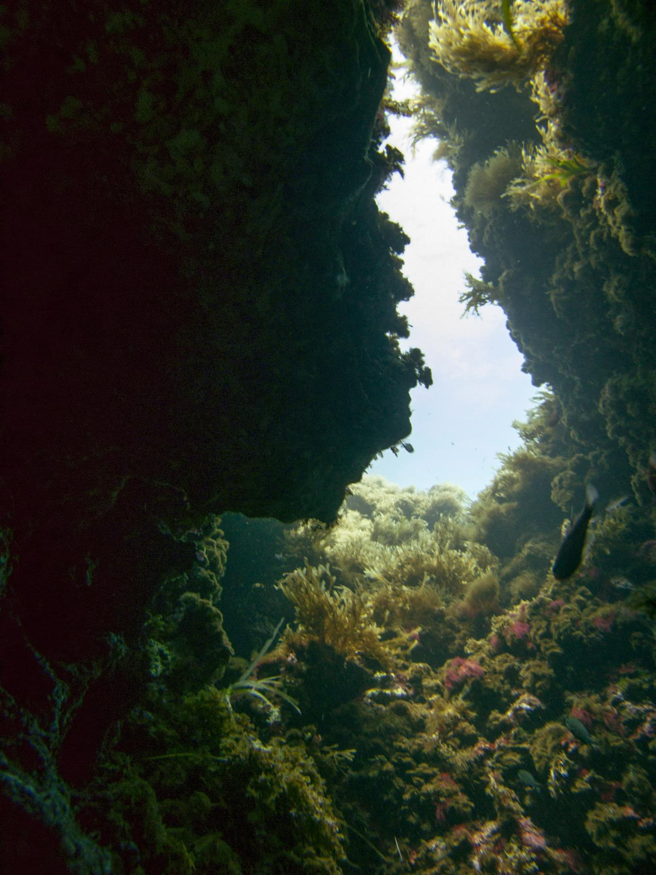 Finger Reef cave