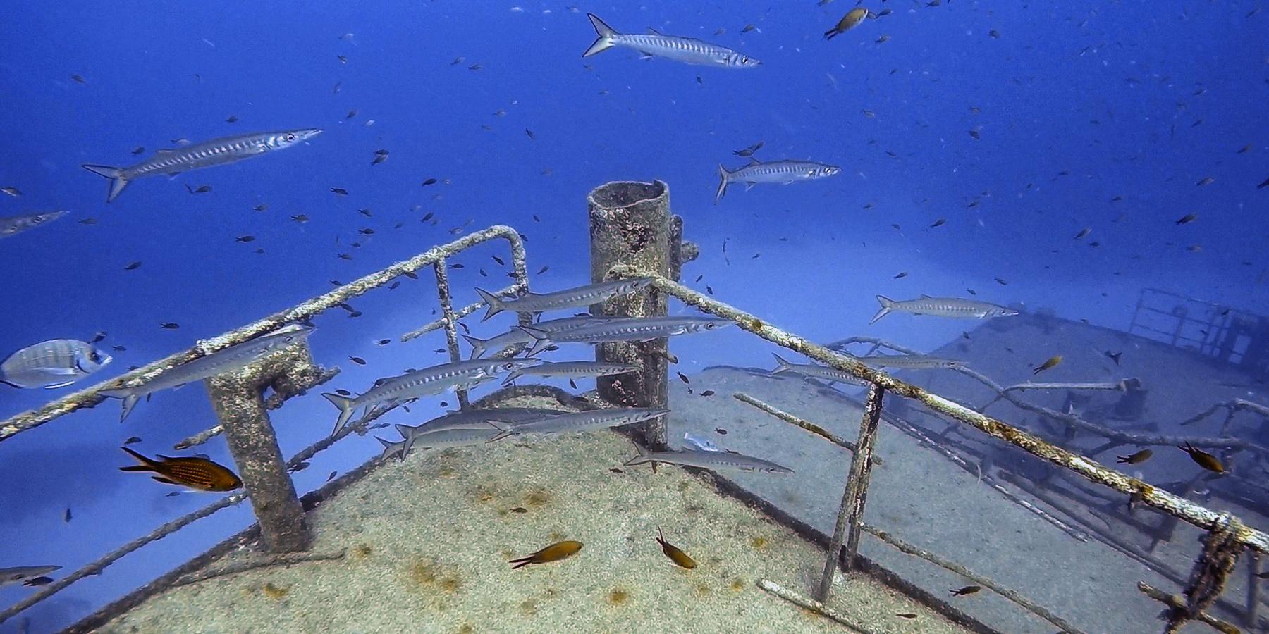 Barracudas at Um El Faroud wreck
