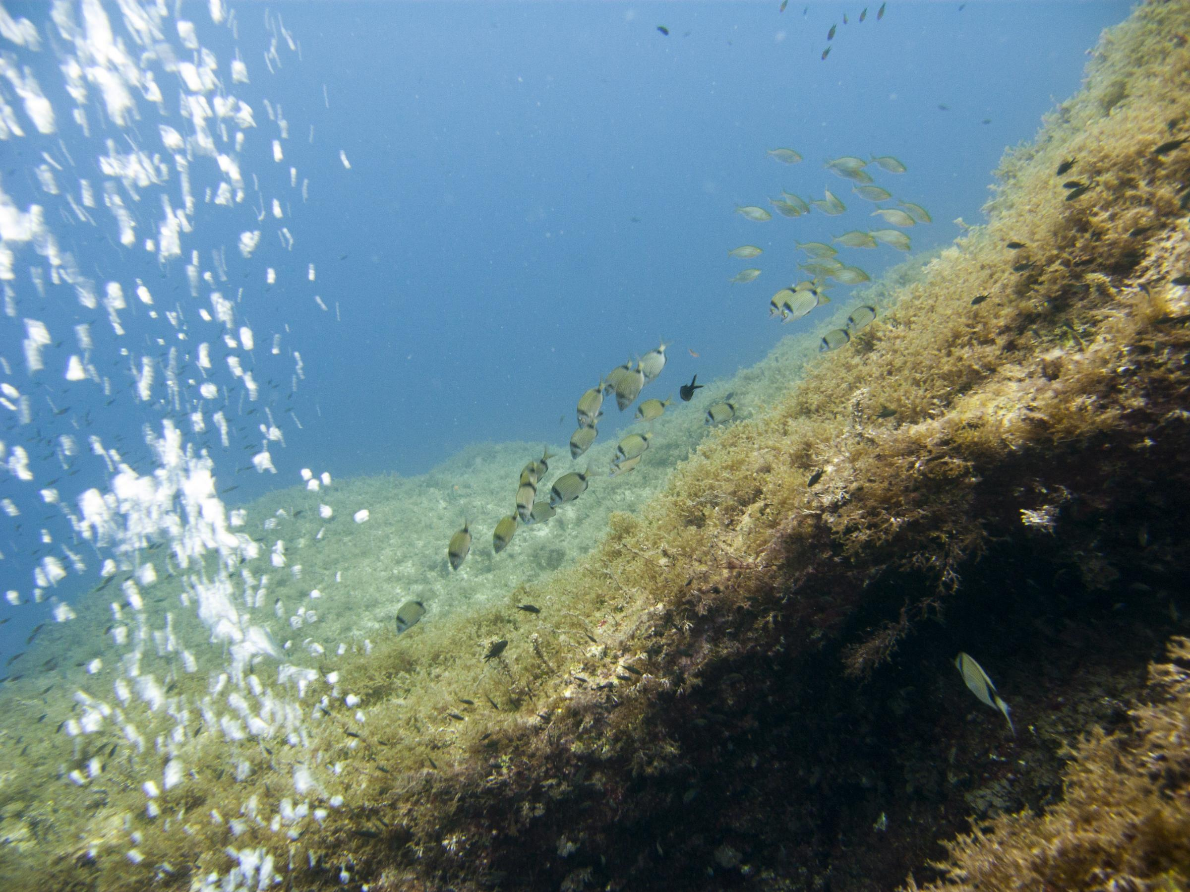 Shoals of fish at West Reef