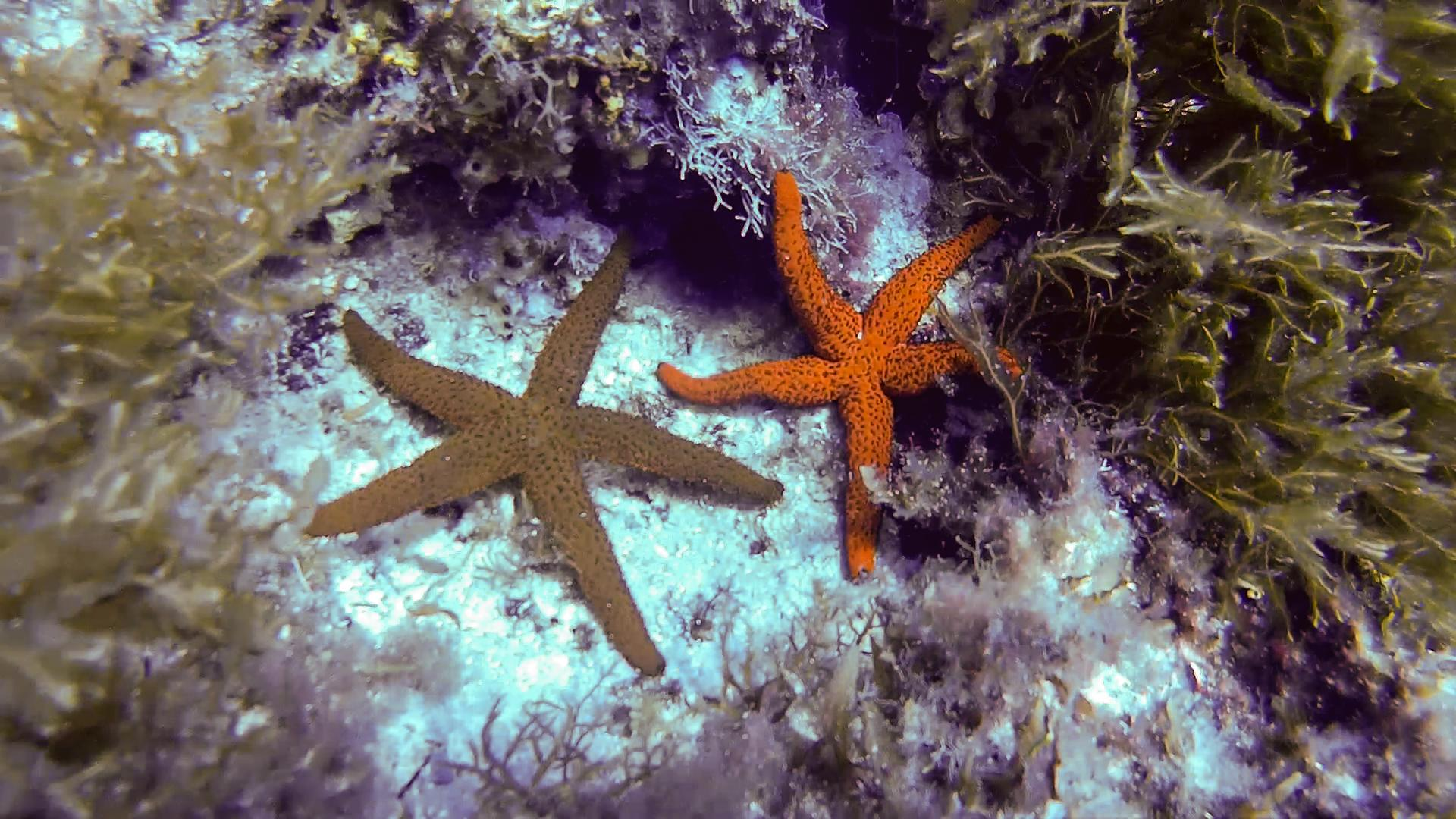 Starfish at East Reef