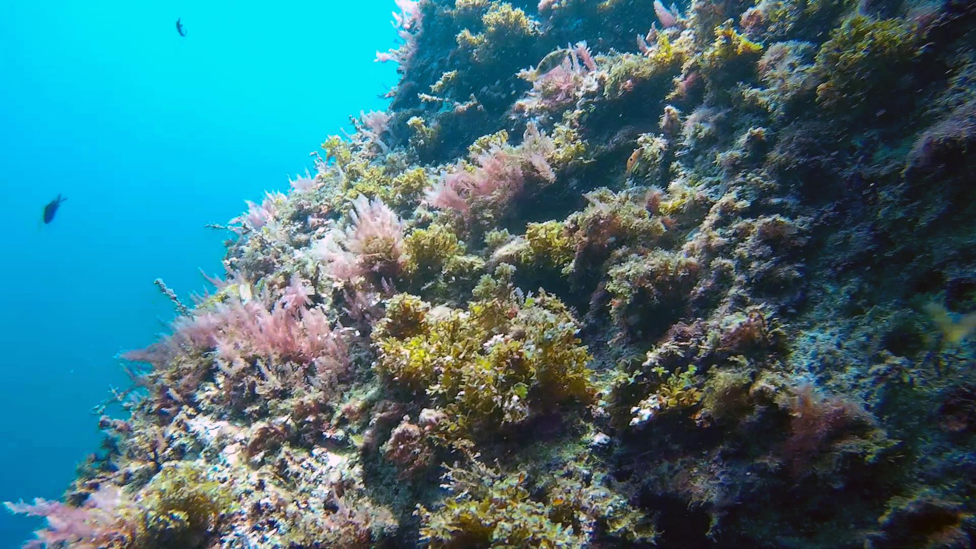 East Reef