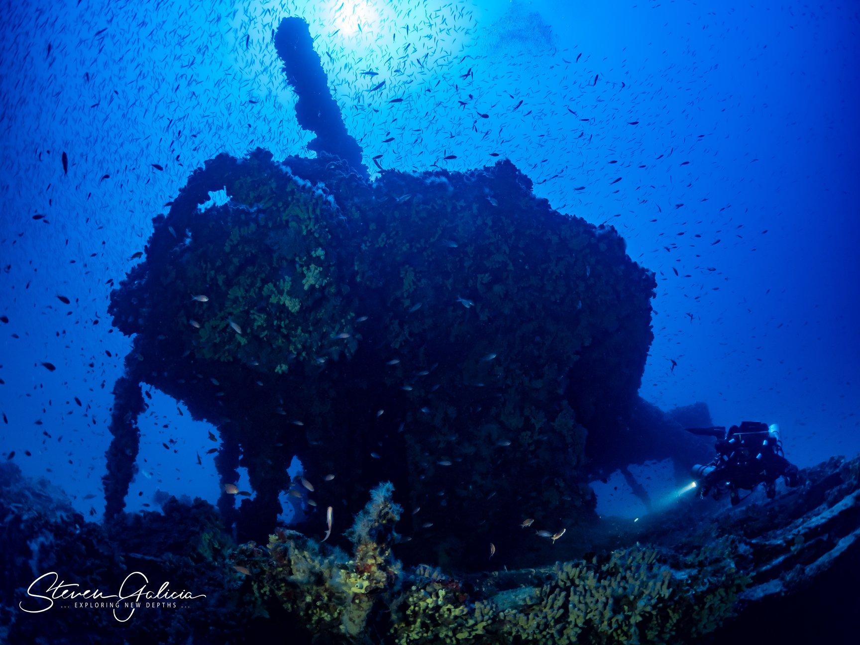 Abundant marine life [Steven Galicia]