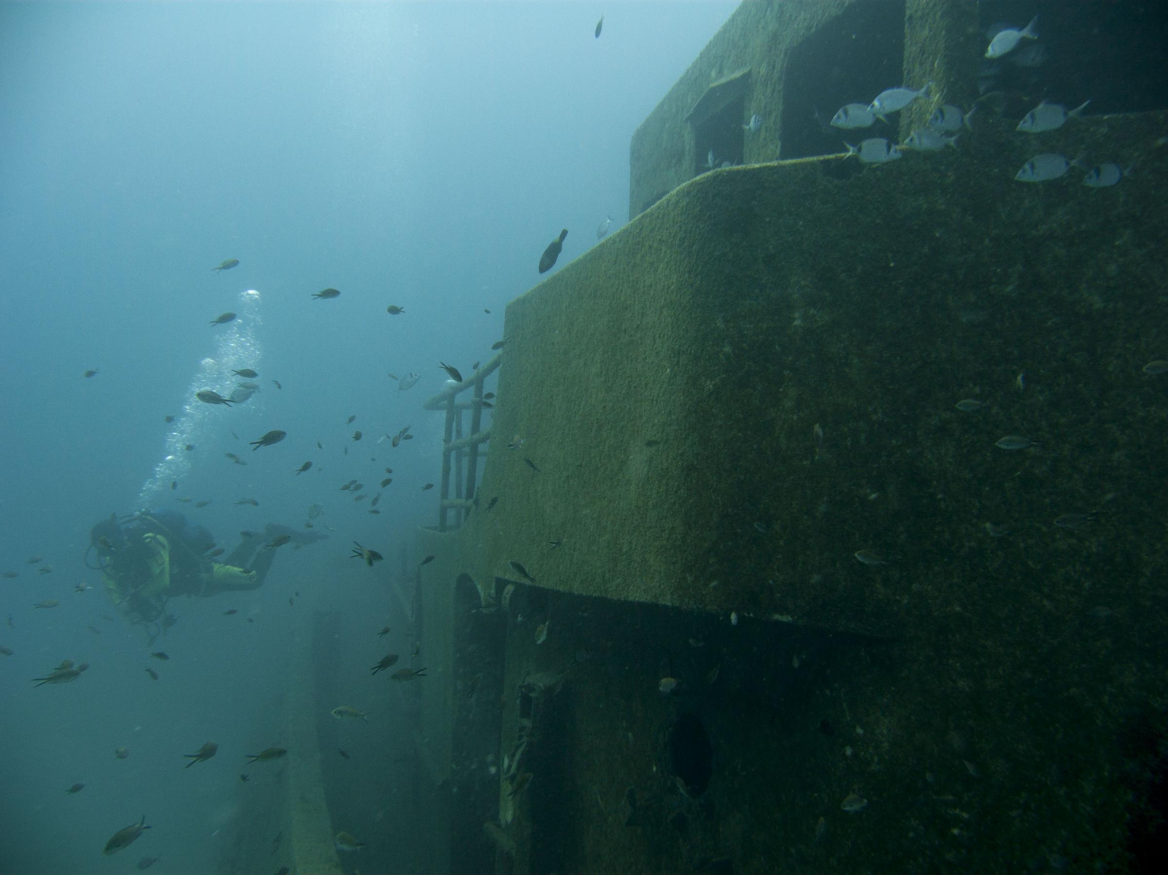 Diver and fish at Tug 2