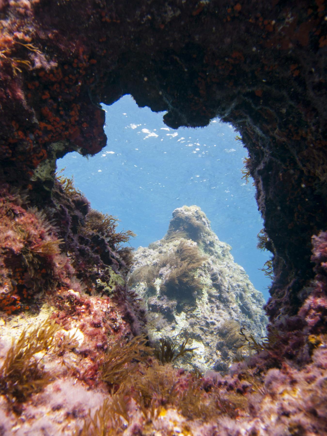 Coral Gardens in Gozo