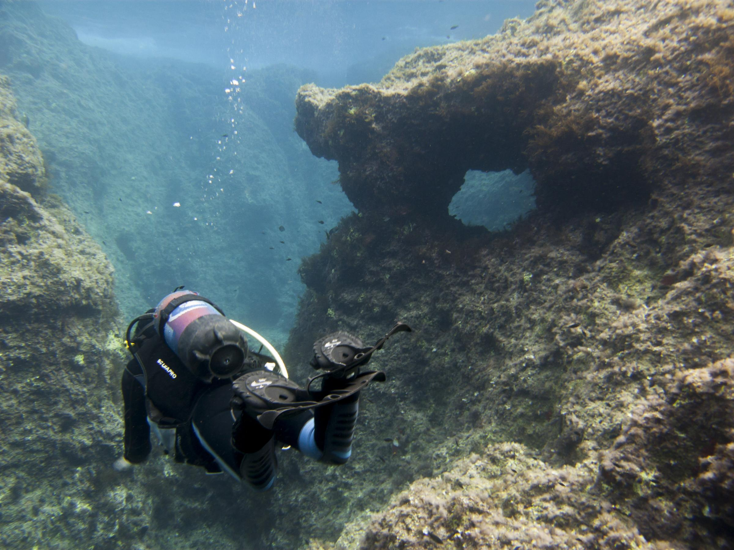 Diver in Coral Gardens