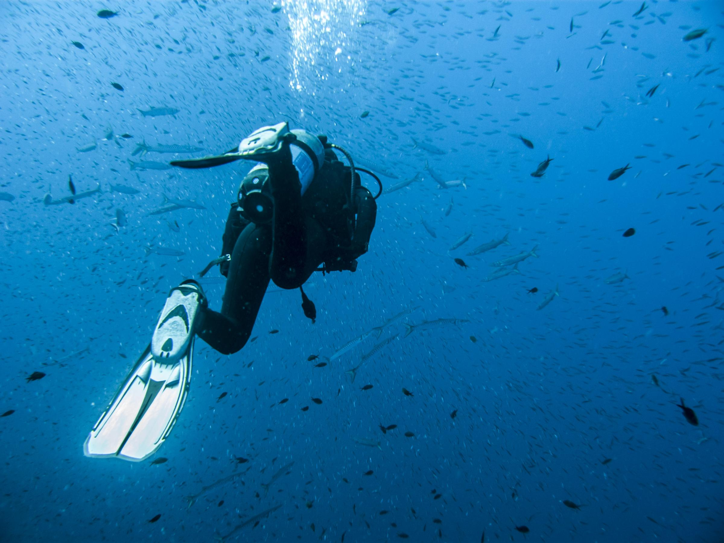 Diver and lots of fish