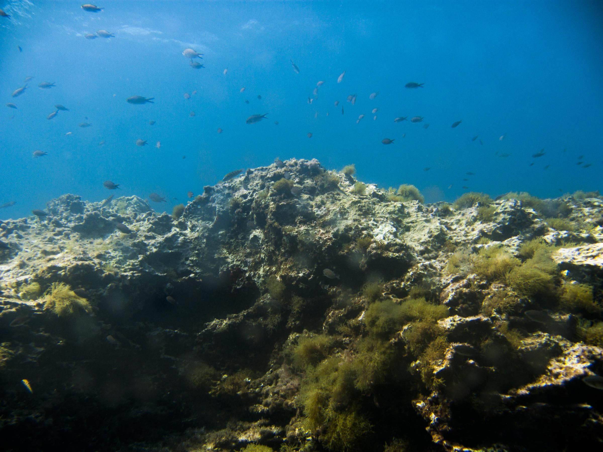 Fortizza Reef dive site