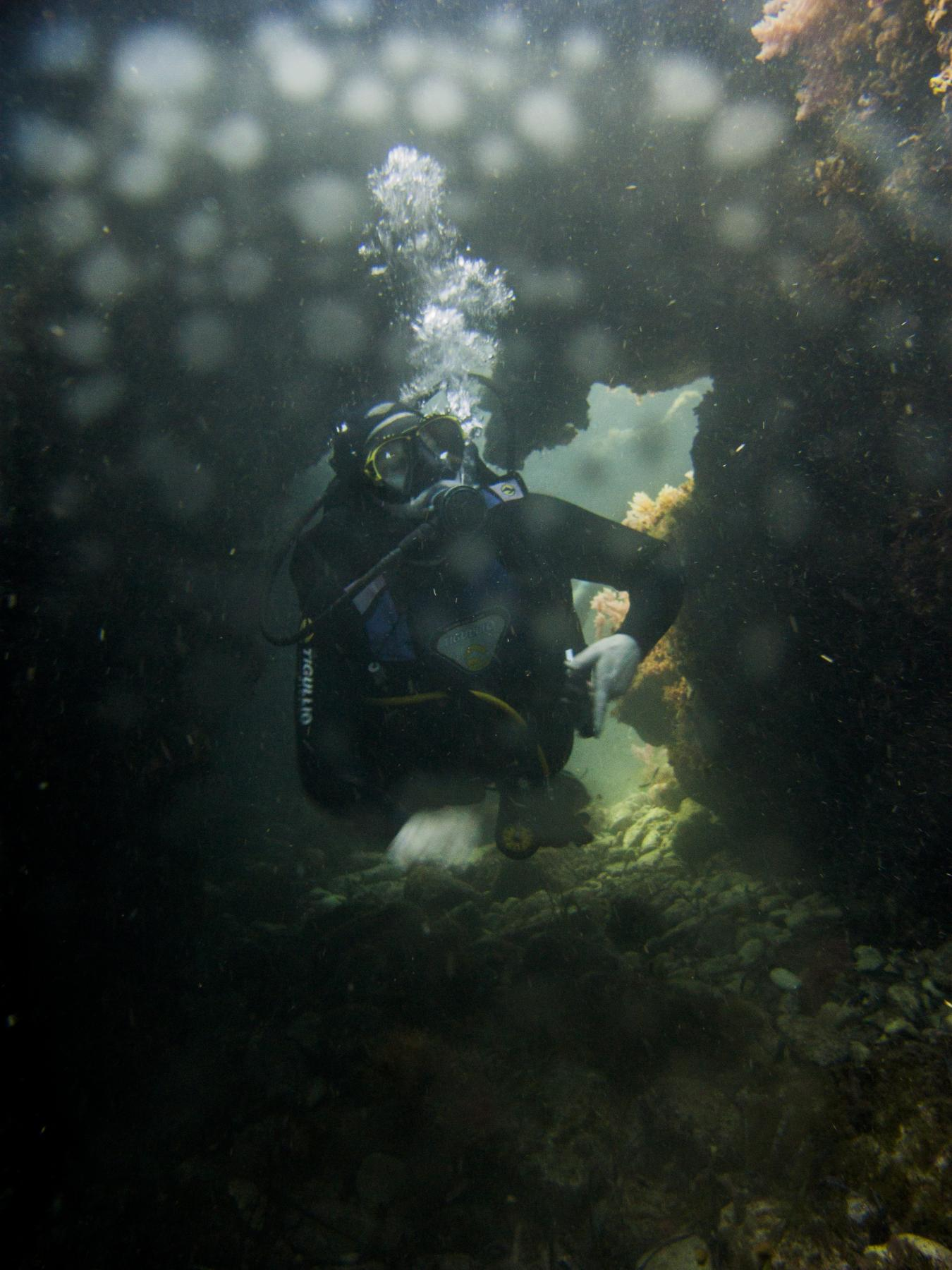 Diver at Fortizza Reef