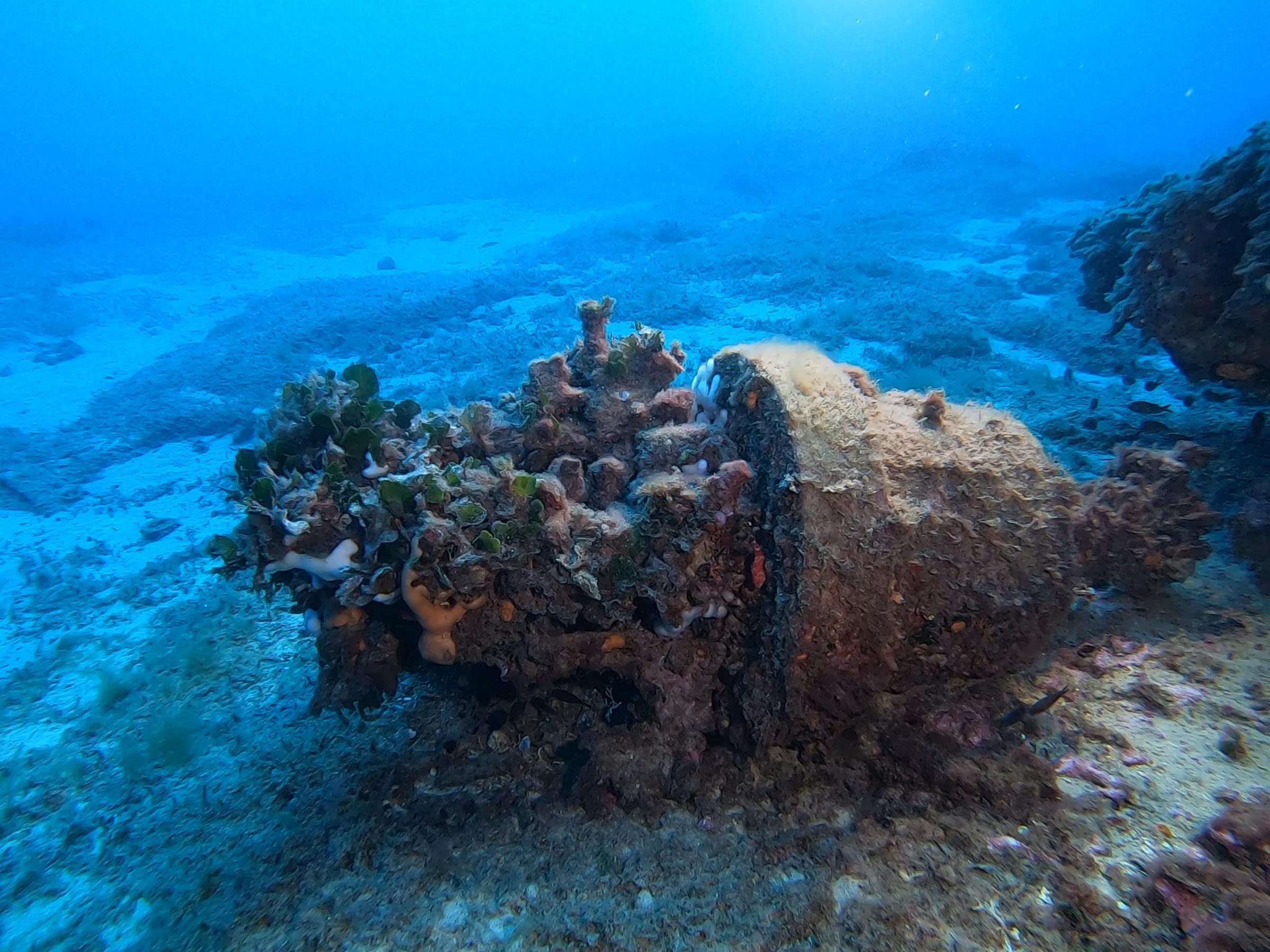 Corals [Adam Sant]