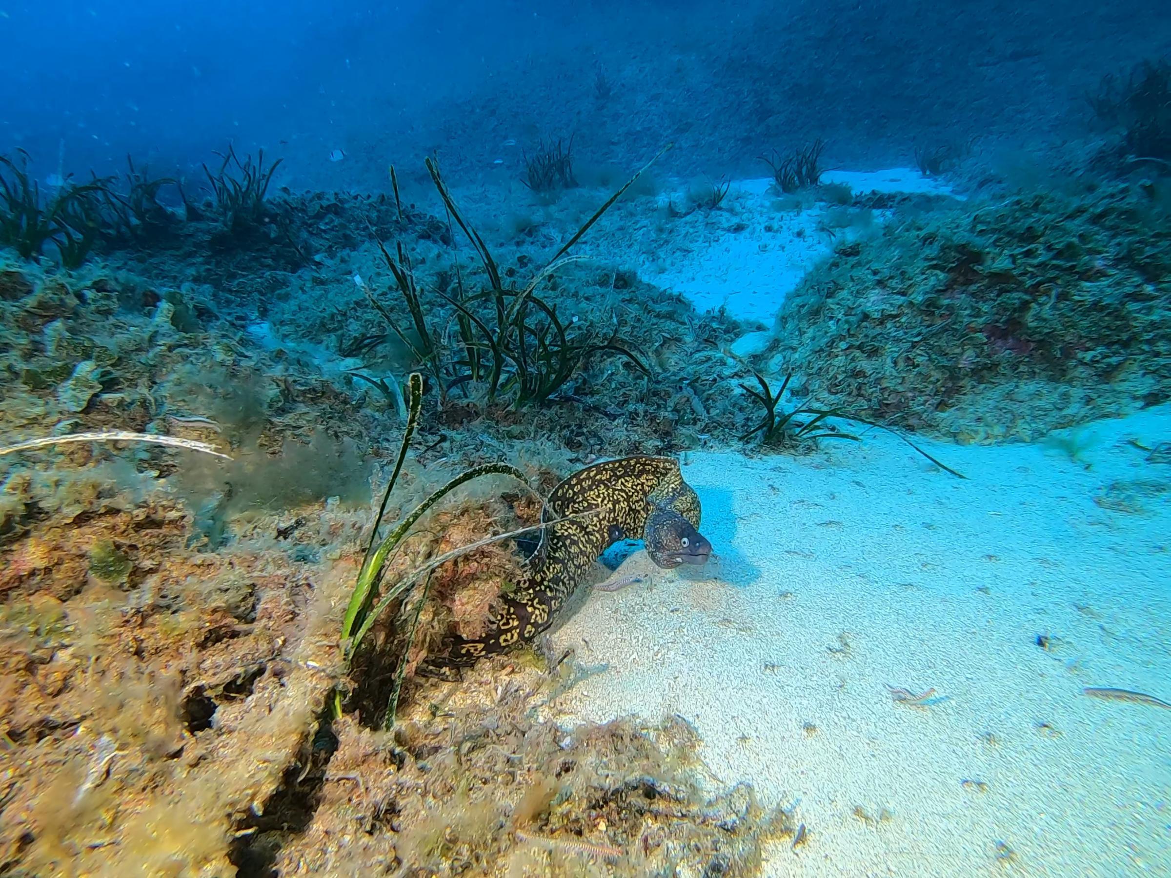Moray eel [Adam Sant]