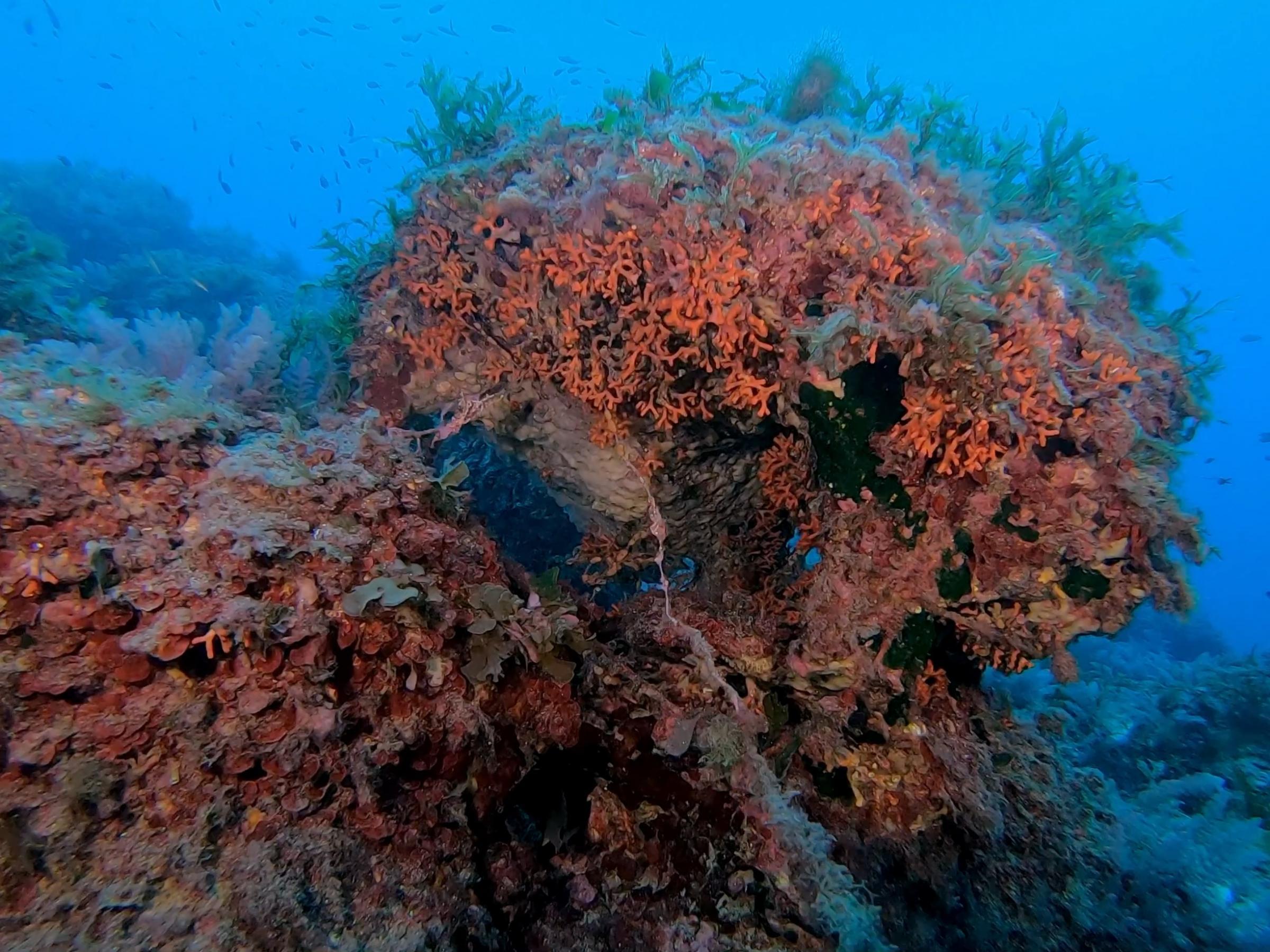False Coral Growth [Adam Sant]