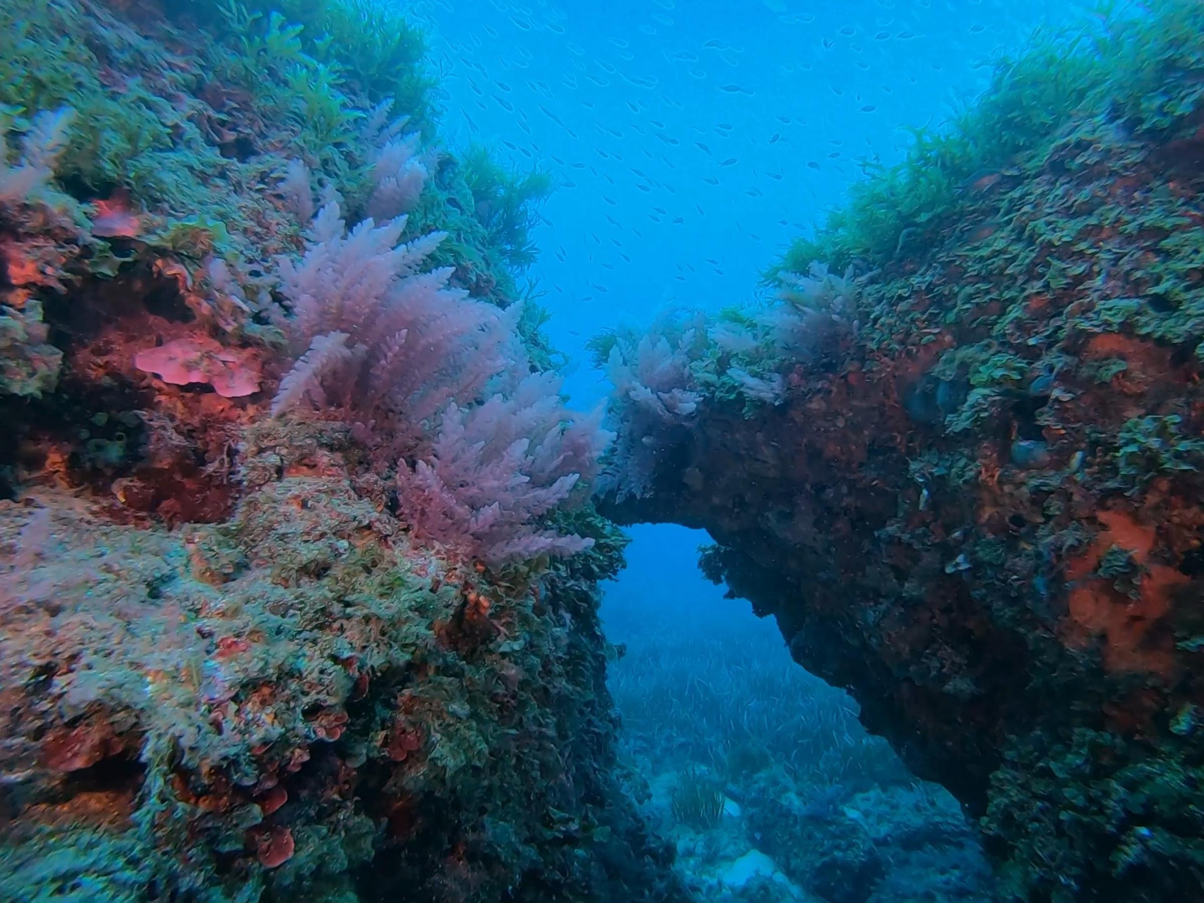 St Paul's Reef [Adam Sant]