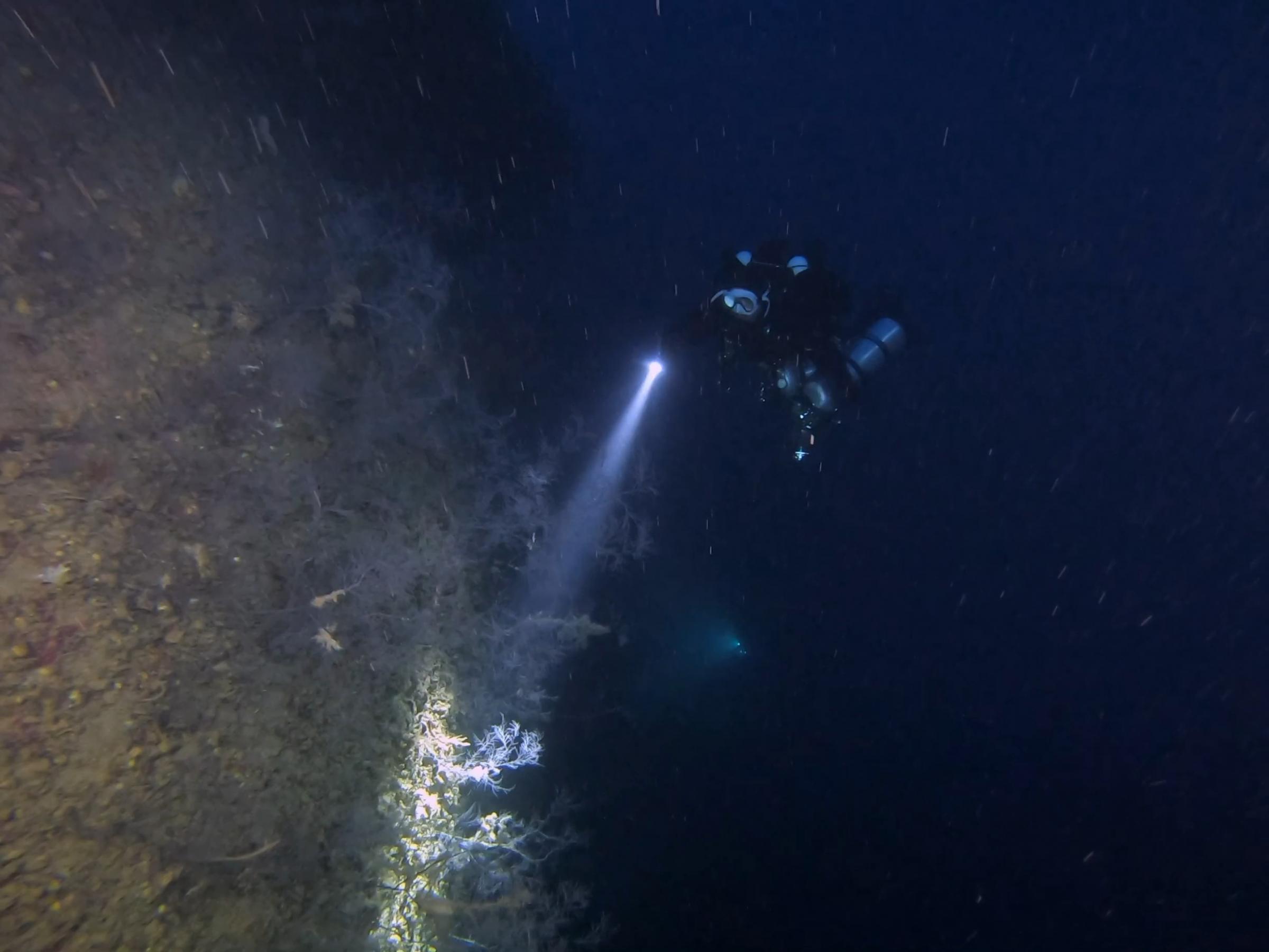 Diver at the deep wreck [Adam Sant]