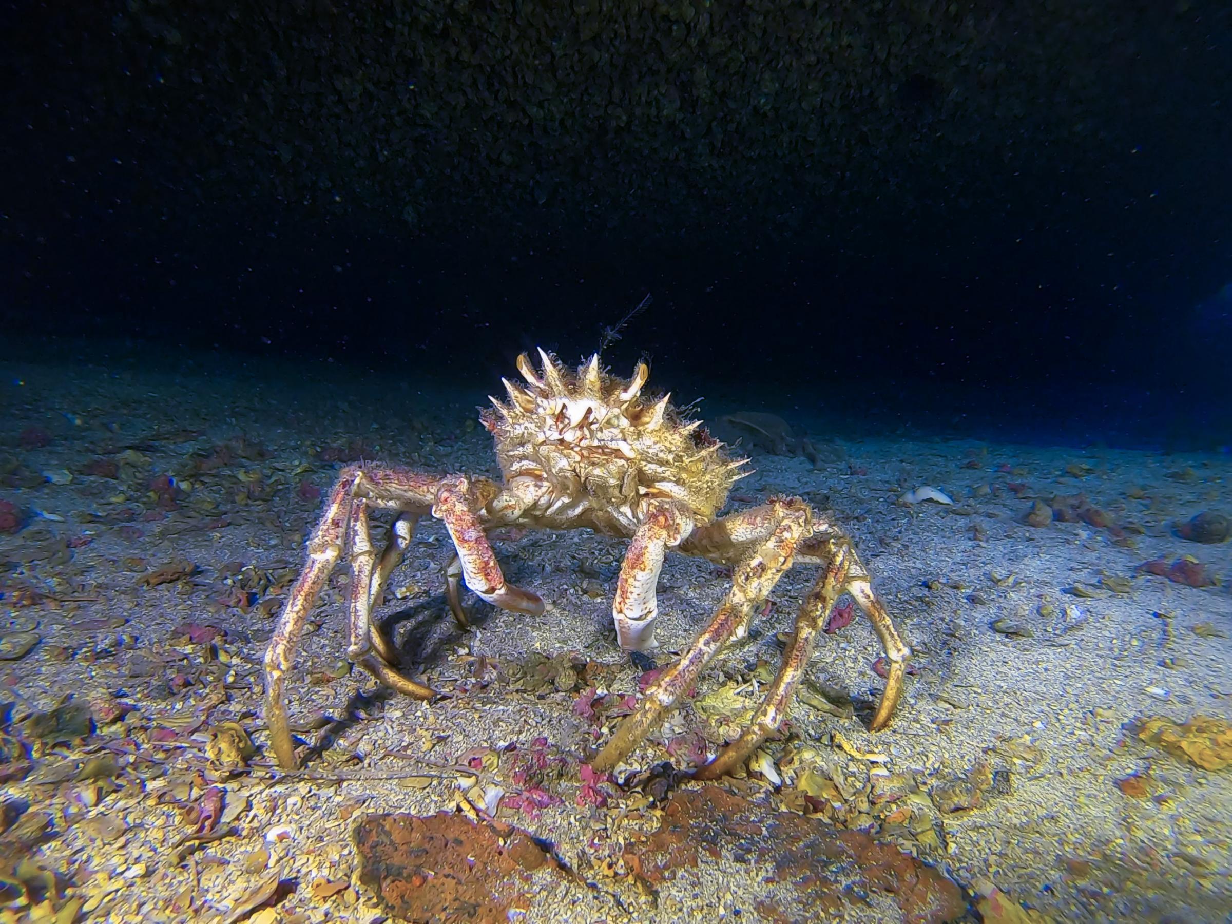 Crab under the bow [Adam Sant]