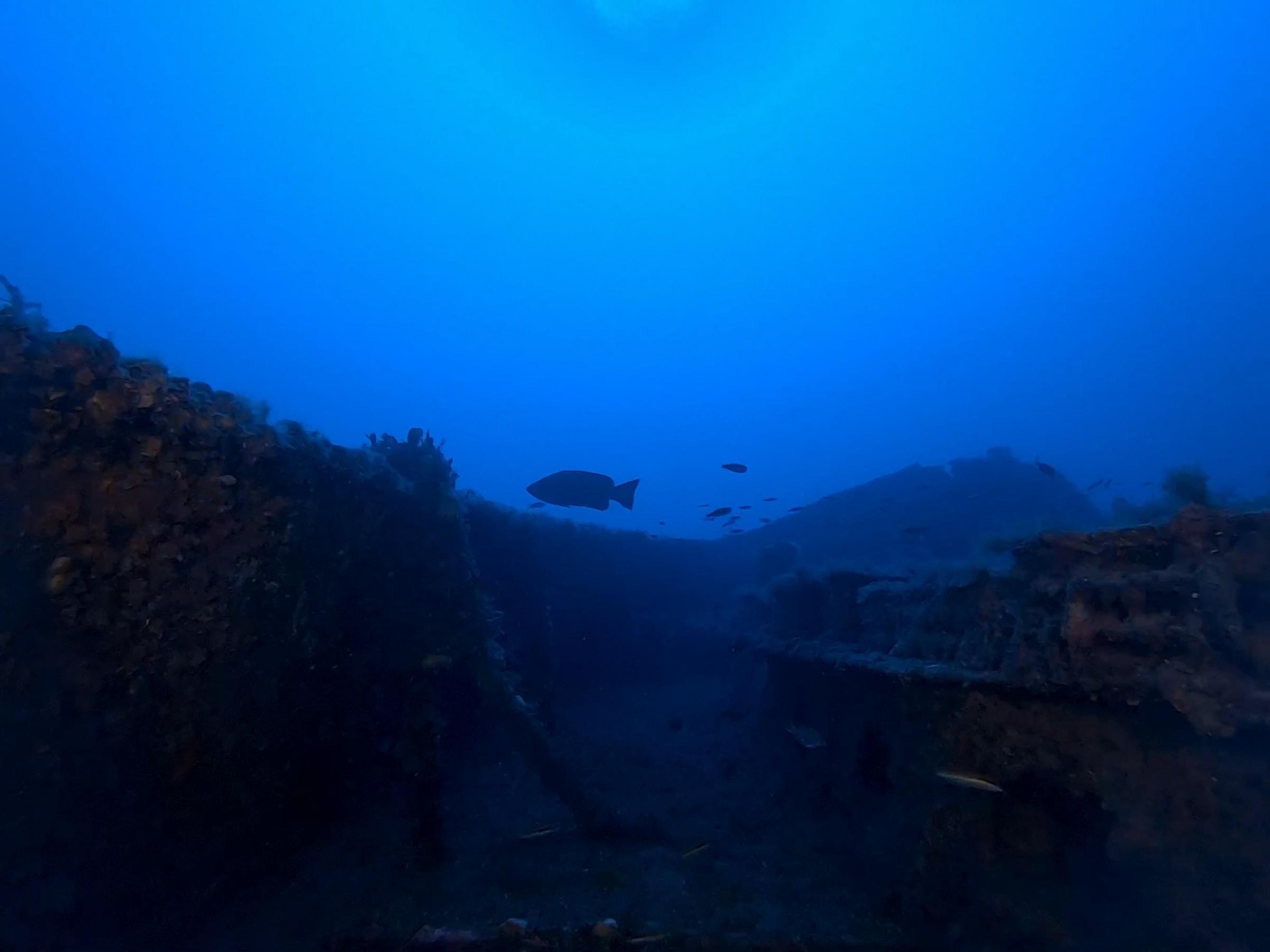 Grouper near the wreck bow [Adam Sant]