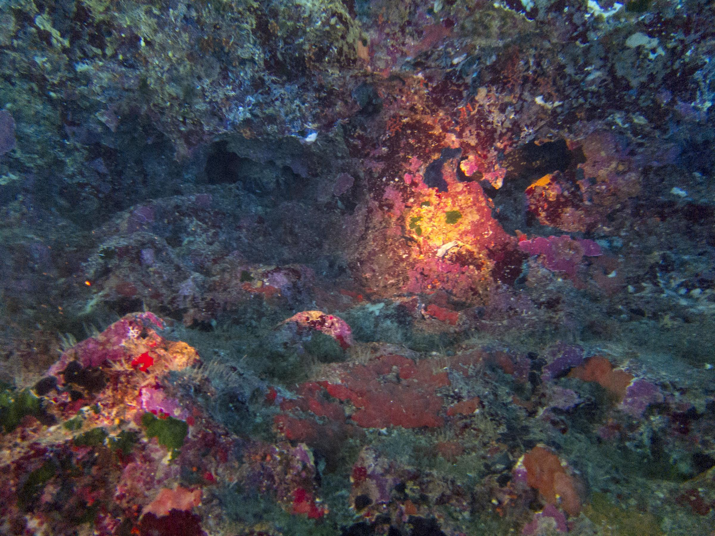Corals inside the Santa Marija Caves